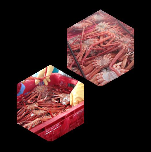 カニ収穫画像
